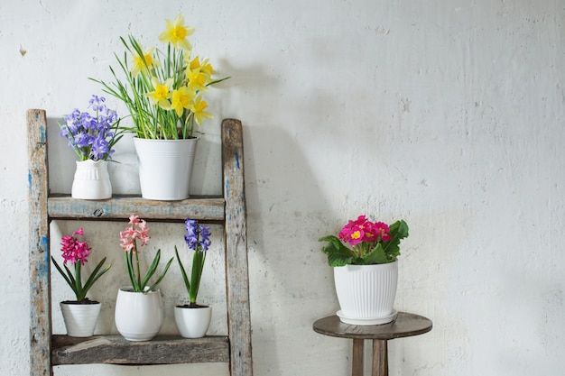 Frühlingsblumen auf hintergrund alte weiße wand