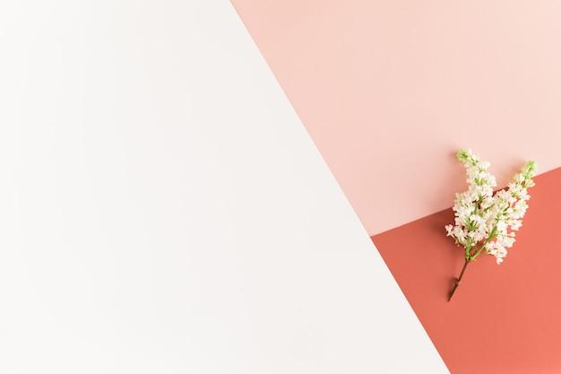 Frühlingsblumen auf weiblichem pastellschreibtisch, weiße lila blumen auf weißer rosa koralle