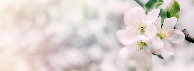 Frühlingsblumen banner frühlingserneuerung natur im frühling blumen blühen neues leben rosa blume sakura