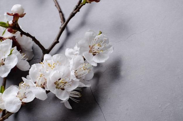 Frühlingsblumen mit blühenden aprikosen der niederlassungen auf grauem hintergrund