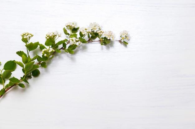 Frühlingsblumen mit weißer wand