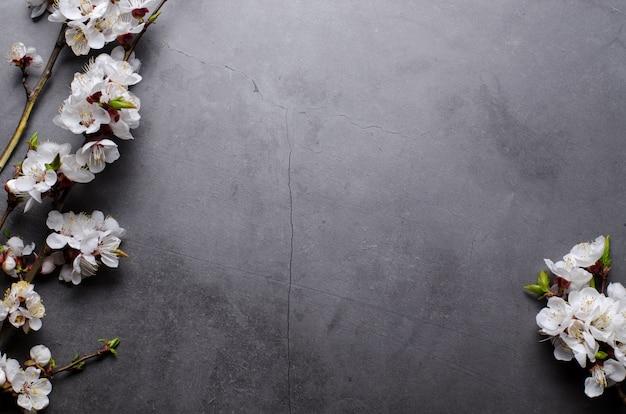 Frühlingsblumen mit zweigen, die aprikosen auf grau blühen