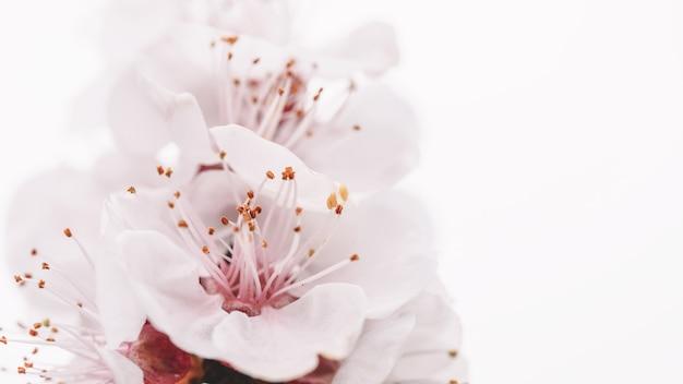 Frühlingsblumen nahaufnahme ansicht frühlingsfarben