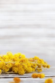 Frühlingsblumen. niederlassung der gelben mimose auf unscharfer holzoberfläche.