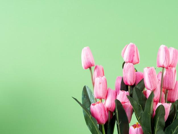 Frühlingsblumen. rosa tulpe auf grünem hintergrund
