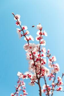 Frühlingsblumen. schöner obstgarten.