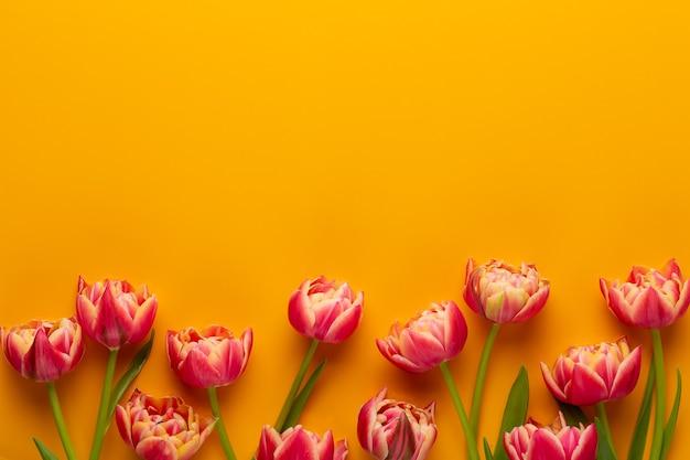 Frühlingsblumen. tulpen auf gelbem hintergrund