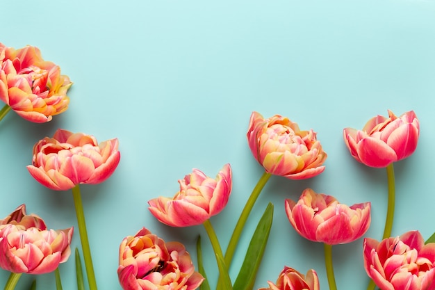 Frühlingsblumen tulpen auf pastellfarben hintergrund.
