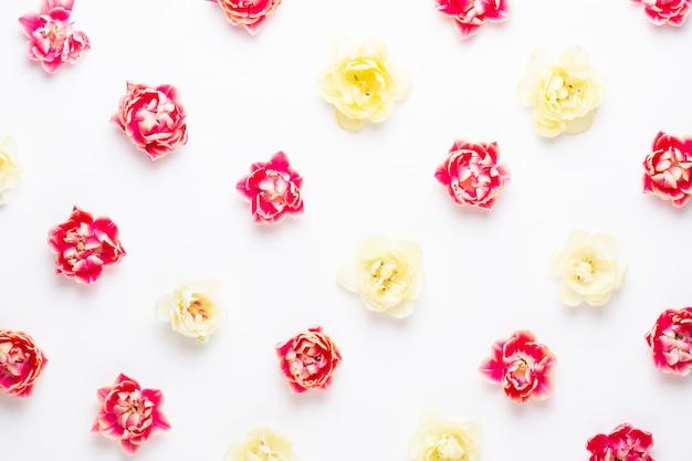 Frühlingsblumen tulpen auf pastellfarben.