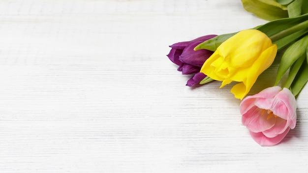 Frühlingsblumen tulpen auf weißem holzhintergrund mit platz für text. platz kopieren. kann als grußkarte, banner am muttertag, frauentag, lehrertag verwendet werden