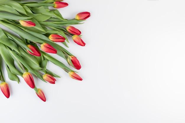 Frühlingsblumen tulpen in einer ecke des rahmens auf einem weißen hintergrund