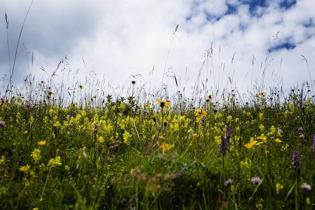 Frühlingsblumenfeld und blauer himmel