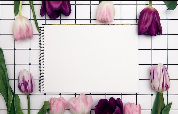 Frühlingsblumenhintergrund mit kopienraum. flacher rahmen aus tulpenblüten mit wassertropfen, draufsicht, breite komposition.