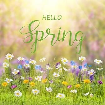 Frühlingsblumenhintergrund mit wilden blumen im gras und handbeschriftungstext hallo frühling