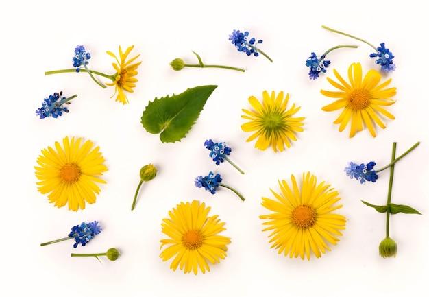 Frühlingsblumenköpfe gelbe gänseblümchen und hyazinthen lokalisiert auf weiß isoliert