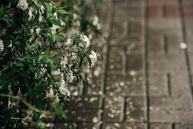 Frühlingsbüsche mit blättern auf denen regentropfen