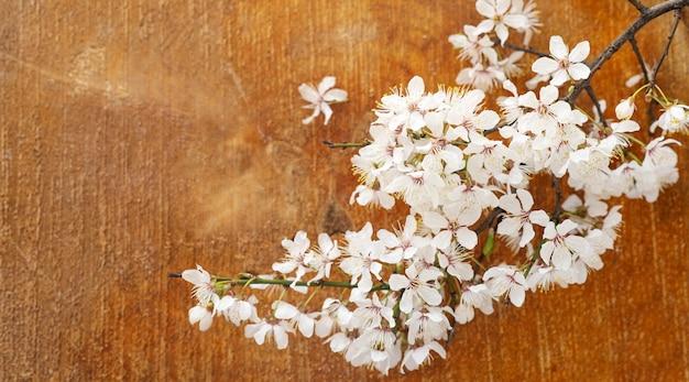 Frühlingsfahne aprikosenblütenblumen auf draufsicht des hölzernen hintergrundes
