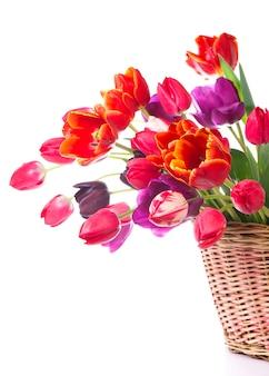 Frühlingsfarbtulpen in einem blumenstrauß mit rosa, roten schönen blumen lokalisiert auf weiß