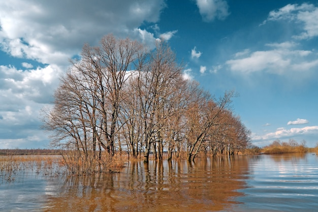 Frühlingsflut in eichenholz