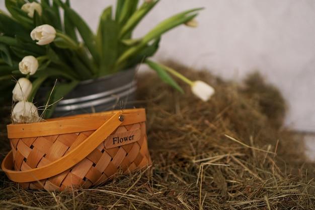 Frühlingsfoto. gelbe tulpen in einem korb im heu. blumenaufschrift auf dem korb.