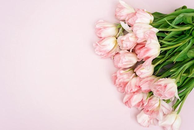Frühlingsfrische blüten der rosa tulpen