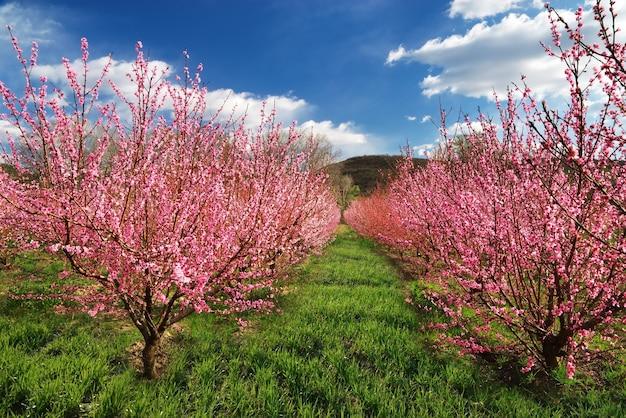 Frühlingsgarten. blühende bäume. naturzusammensetzung.