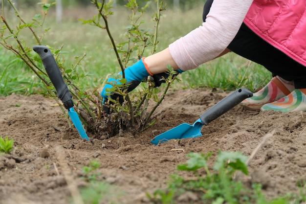 Frühlingsgartenarbeit, reifer weiblicher gärtner mit gartenwerkzeugen