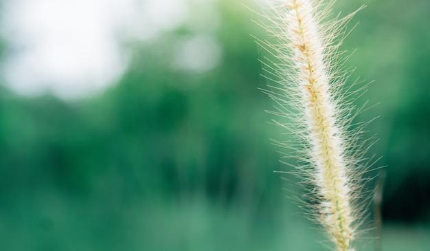 Frühlingsgras fllower bei sonnenaufgang frischer naturhintergrund