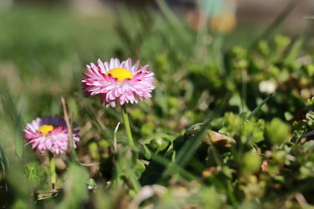 Frühlingsgras und blumen