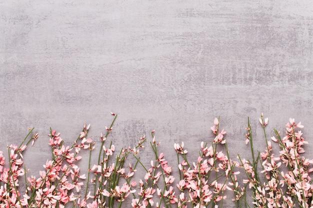Frühlingsgrußkarte, lebende korallenrote blumen auf dem pastellfarbenen hintergrund.