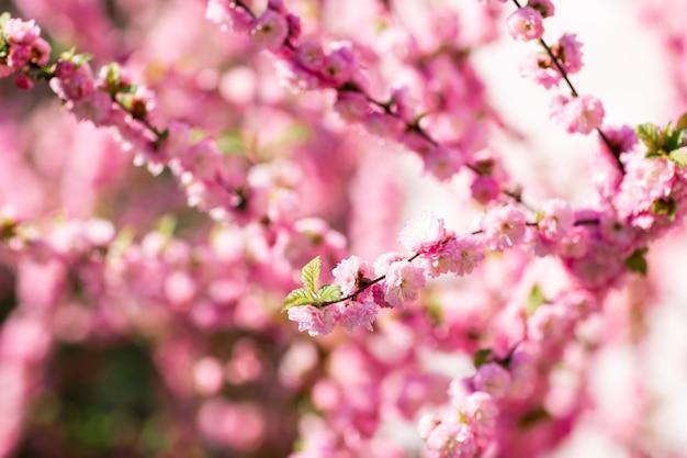 Frühlingsheller blühender und blühender blumenzweig