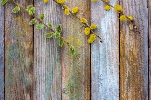 Frühlingshintergrund der blühenden weide und des hartriegels verzweigt sich auf einen alten hölzernen hintergrund mit einem kopienraum