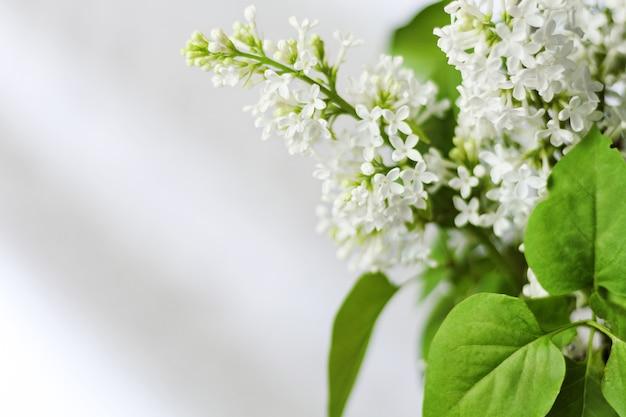 Frühlingshintergrund mit blühendem weißem flieder gegen hellen hintergrund, leerer platz für text, kleine schärfentiefe.