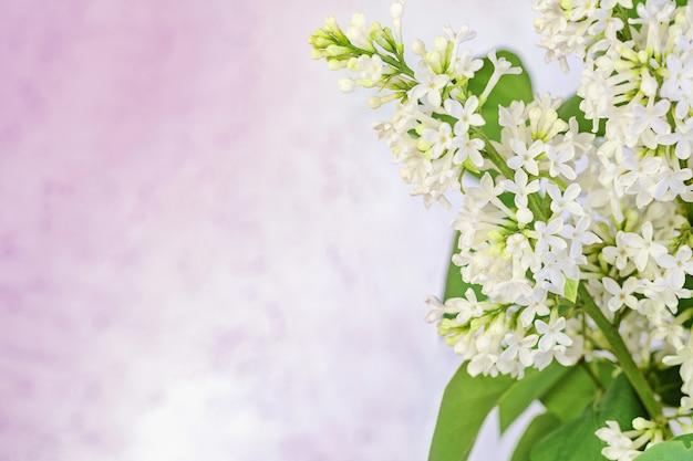 Frühlingshintergrund mit blühendem weißem flieder, leerer platz für text, kleine schärfentiefe.
