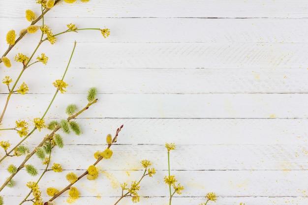 Frühlingshintergrund mit blühenden niederlassungen der weide, hartriegel auf weißem hölzernem hintergrund mit kopienraum