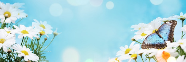 Frühlingshintergrund mit blüte