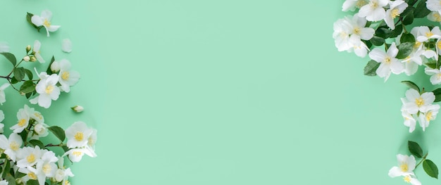 Frühlingshintergrund. weißer jasmin blüht auf einem minzhintergrund. banner.