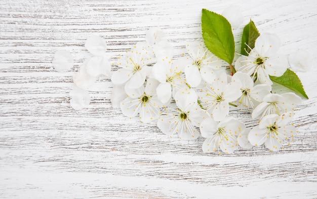 Frühlingskirschblüte