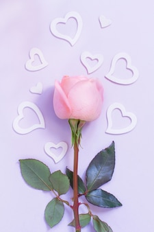 Frühlingskomposition mit rose und herzen auf einem pastellhintergrund