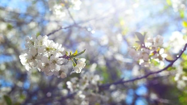 Frühlingskonzept von blühenden bäumen, fruchtbarkeit und natürlicher wiederherstellung