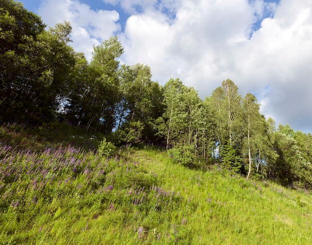 Frühlingslandschaft eines hügels mit gras und blumen und bäumen an der spitze