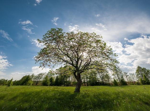 Frühlingslandschaft mit baum auf wiese, grünem gras und blumen, schöner himmel