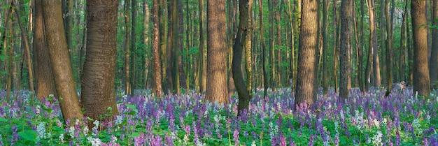 Frühlingslandschaft mit den ersten frühlingsblumen im wald