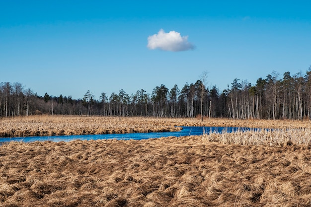 Frühlingslandschaft mit einem blauen fluss und sumpf.