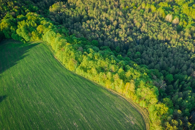 Frühlingslandschaft mit laubwald aus flughöhe. schöner wald im abendlichen warmen licht