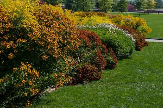 Frühlingslandschaft mit verschiedenen blumenwiese und grünem gras im park