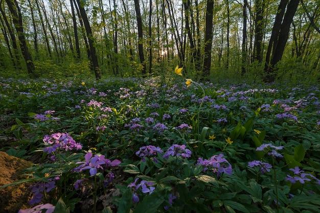 Frühlingslandschaft mit wäldern. sommerwald mit blumen und grünen blättern