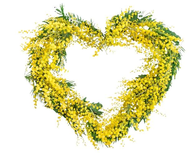 Frühlingsmimosenblumenkranz in der herzform lokalisiert auf weiß. frauentag, muttertag, frühlingskartenkonzept