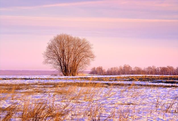 Frühlingsmorgen auf dem feld kahle bäume inmitten von schmelzendem schnee und trockenem gras