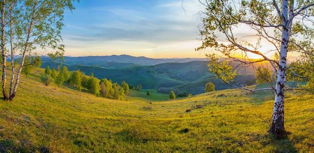 Frühlingsmorgen auf dem land mit birken